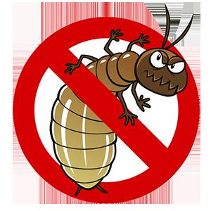 Termites aka White Ants